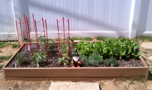 This is just one of 3 garden beds we created last year.